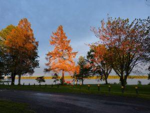 Farran Park Campground